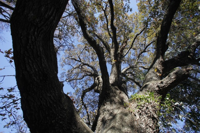 tree-603150_960_720